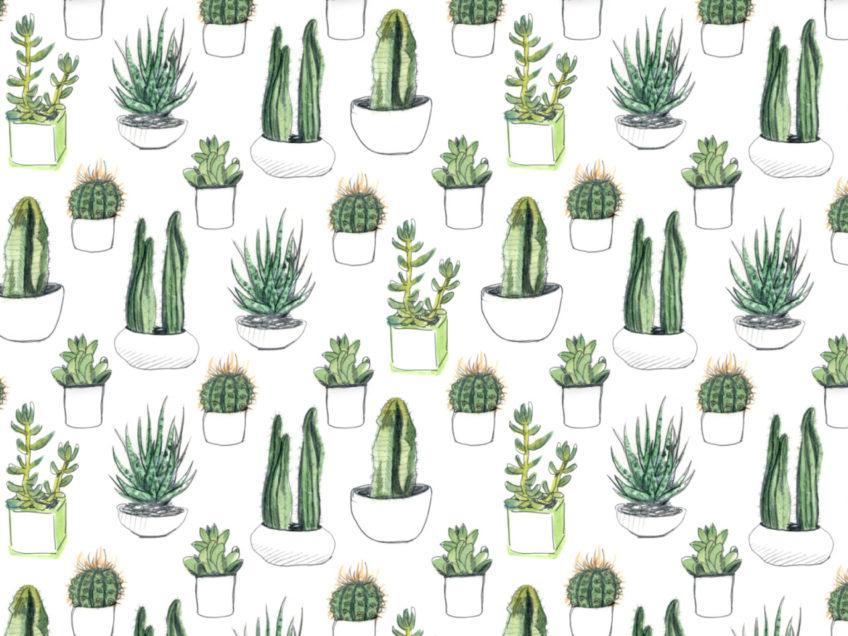 Le 5 piante per chi vive in appartamento
